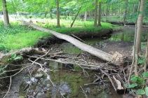 Site #2 Downstream